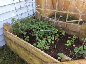 Of course tomatoes and some pole beans.